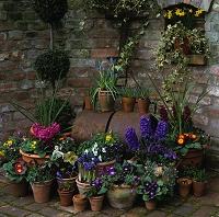植木鉢と花