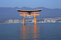 広島県 宮島の厳島神社の大鳥居