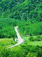 北海道 森への道