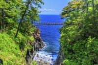 静岡県 新緑の城ヶ崎海岸(伊東八景) 門脇吊橋と伊豆大島