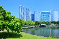 東京都 中央区 浜離宮恩賜庭園と汐留シオサイトのビル群