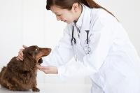 犬の診察をする獣医