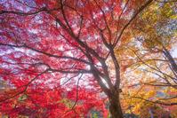 京都 嵐山公園 紅葉