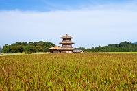 歴史公園鞠智城 赤米(古代米)と八角形鼓楼