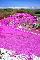 北海道 東藻琴芝桜公園