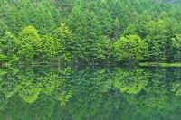 日本 長野県 新緑の御射鹿池と森