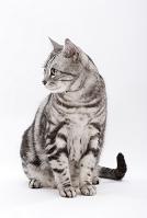 座って横を向いている猫