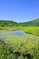 群馬県 上田代の池塘と青空