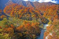 山形県 渓流玉川