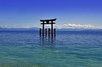滋賀県 琵琶湖 白髭神社 大鳥居