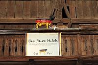 ドイツ オーバーバイエルン 猫