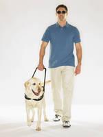 盲導犬と歩く男性