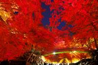 愛知県 岩野堂公園