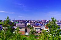 北海道 白樺の新緑と住宅街