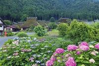 京都府 アジサイ咲くかやぶきの里