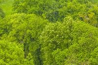 セルビア ベオグラード 葉