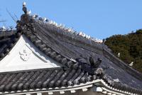 神奈川県 小田原城 お堀のユリカモメ