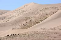 モンゴル ゴビ ホンゴル砂丘