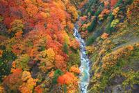 青森県 八甲田山 城ヶ倉渓流の紅葉