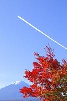 山梨県 河口湖畔 富士山とモミジとひこうき雲