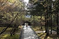 高知県 四国霊場第31番 竹林寺 竹林寺の参道を歩くお遍路さん