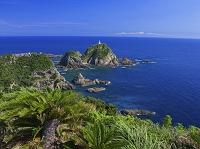 鹿児島県 佐多岬のソテツ自生地と佐多岬灯台