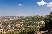 森林 山岳地帯 アジュルン近郊 ヨルダン