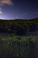 長野県 松尾峡のホタル