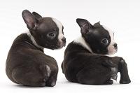背中を丸める子犬2頭