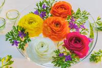 カラフルなラナンキュラスの花