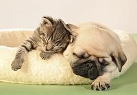 仲良く眠る子猫と子犬