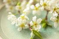 白いプラムの花と和食器