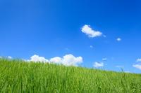 島根県 草原と雲浮かぶ青空