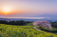 長崎県 菜の花咲く朝の白木峰高原