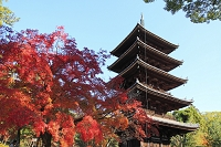 京都府 仁和寺 紅葉と五重塔