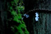 御神木と注連縄