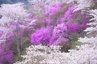 岡山県 美咲町 三休公園