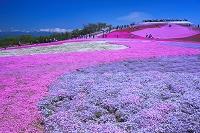 愛知県 天空の花回廊