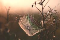水滴の付いた蜘蛛の巣