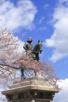 宮城県 伊達政宗騎馬像と桜