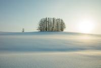 北海道 美瑛の雪景色