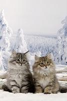 雪景色の中の猫