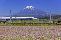 静岡県 レンゲ畑と東海道新幹線と富士山