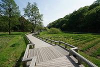 東京 神代植物公園の水生植物園