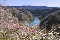 奈良県 月ヶ瀬梅林と名張川