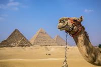 エジプト  カイロ ラクダ