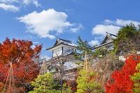 石川県 金沢城公園 雪吊りと石川門