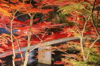 愛知県 紅葉の香嵐渓 待月橋ライトアップ