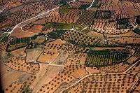 マルタ共和国 オリーブ畑 マルタ本島