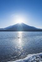 山梨県 山中湖村 山中湖 ハクチョウとダイヤモンド富士
